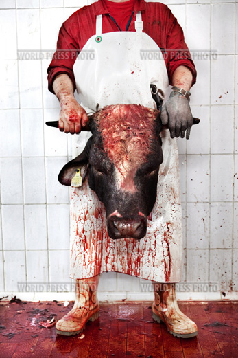 Tommaso Ausili - Slaughterhouse (World Press Photo 2010) foto 1
