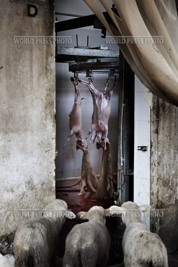 Tommaso Ausili - Slaughterhouse (World Press Photo 2010) foto 2