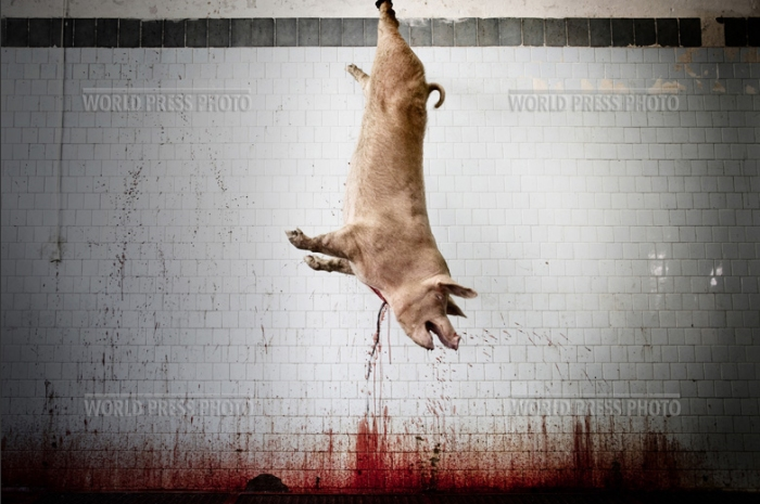 Tommaso Ausili - Slaughterhouse (World Press Photo 2010) foto 3
