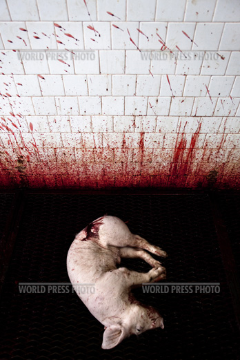 Tommaso Ausili - Slaughterhouse (World Press Photo 2010) foto 7