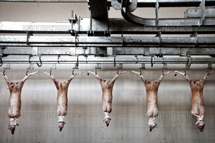 Tommaso Ausili - Slaughterhouse (World Press Photo 2010) foto 9