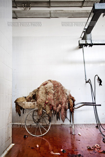 Tommaso Ausili - Slaughterhouse (World Press Photo 2010) foto 10