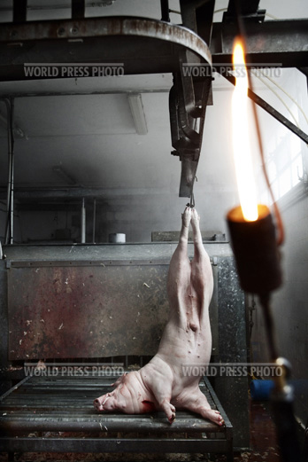 Tommaso Ausili - Slaughterhouse (World Press Photo 2010) foto 11