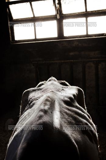 Tommaso Ausili - Slaughterhouse (World Press Photo 2010) foto 12