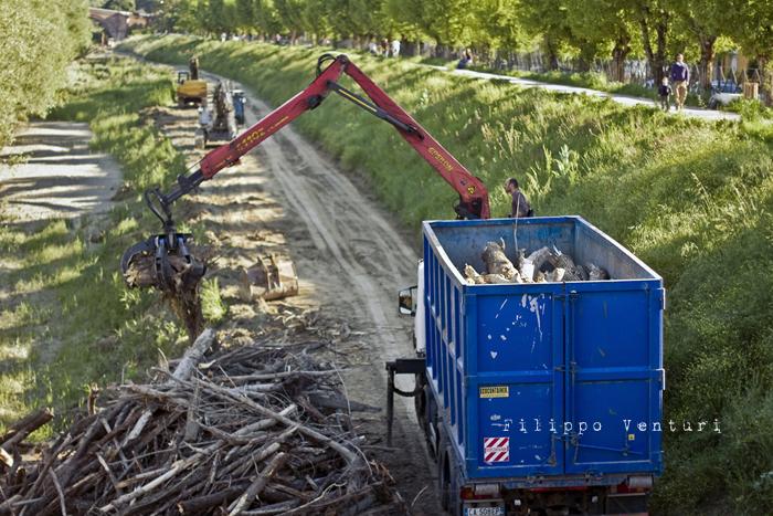 Rimozione dei tronchi e detriti che si erano accumulati alla base del Ponte Nuovo, nelle recenti piene del Fiume Savio