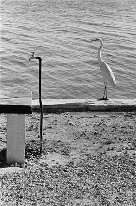 Elliott Erwitt - Photo 8
