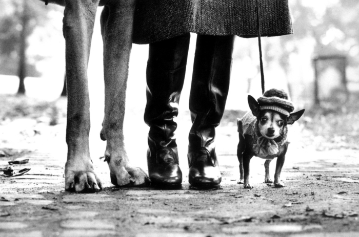 Elliott Erwitt - Photo 9