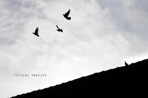 Album Stratega by Prosa87