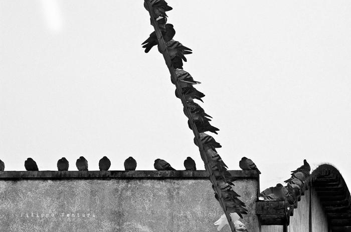 Cesena, 17 Dicembre 2010 - Foto 4