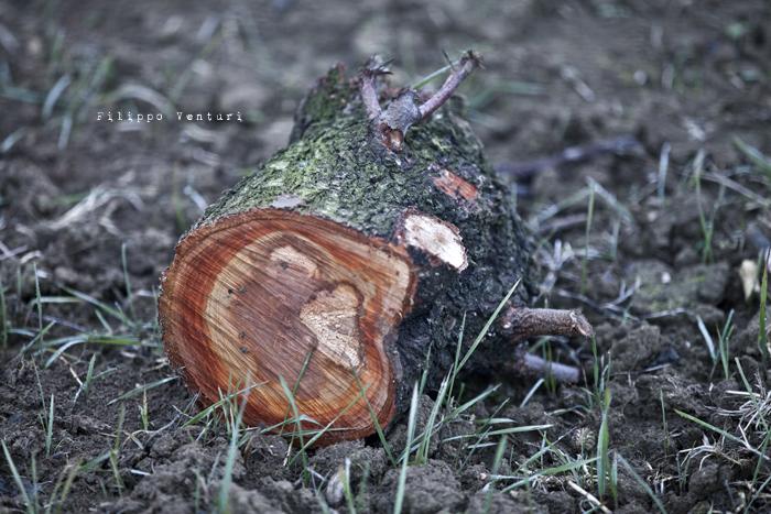 Dies irae (photo 8)