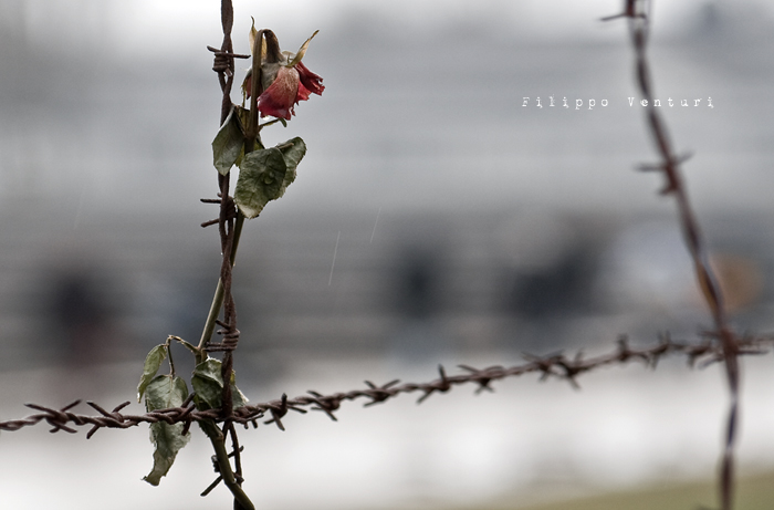 Giorno della Memoria - Shoa - Olocausto (foto 1)