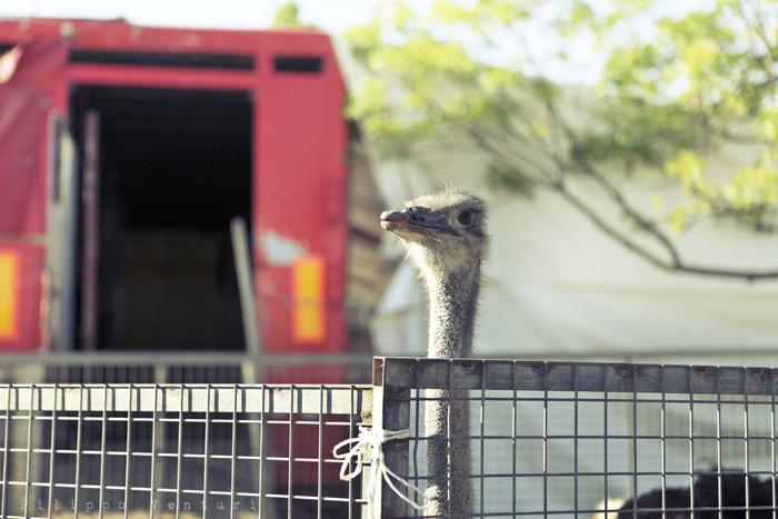 LAV Forlì Cesena, Sit-in contro il Circo con animali (foto 3)