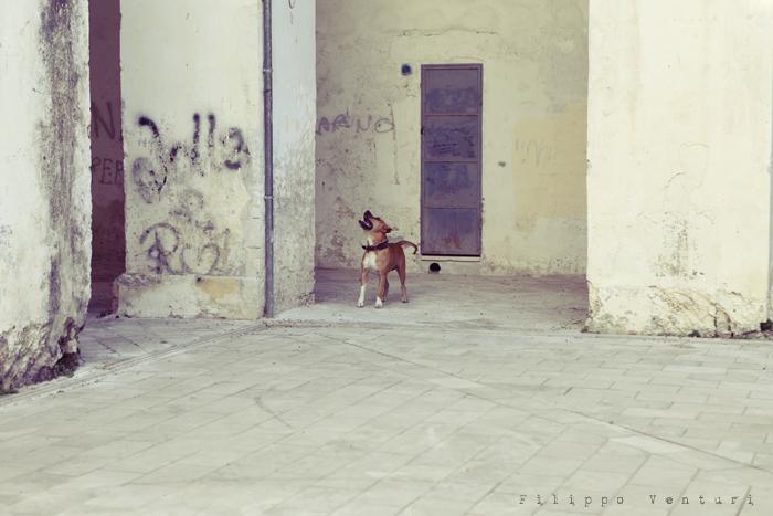 Nardò, l'adolescente (foto 3)