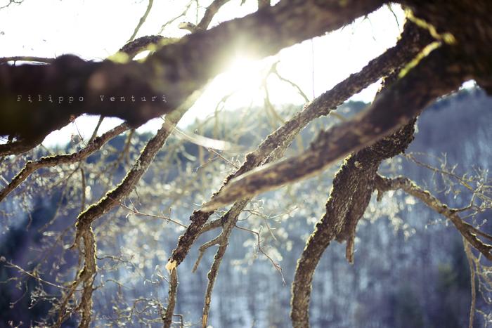 Capodanno 2012, foto 5