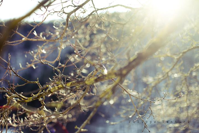 Capodanno 2012, foto 6