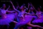 Balletto di Mosca, La bella addormentata, foto 46
