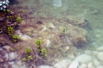 ConCorso 2012, foto 17 (zona fiume: Gorgo dello spicchio)