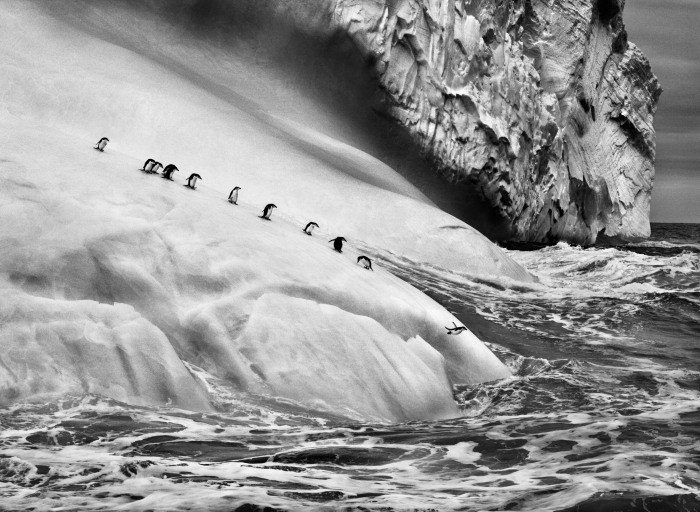 Sebastiao Salgado, photo 10