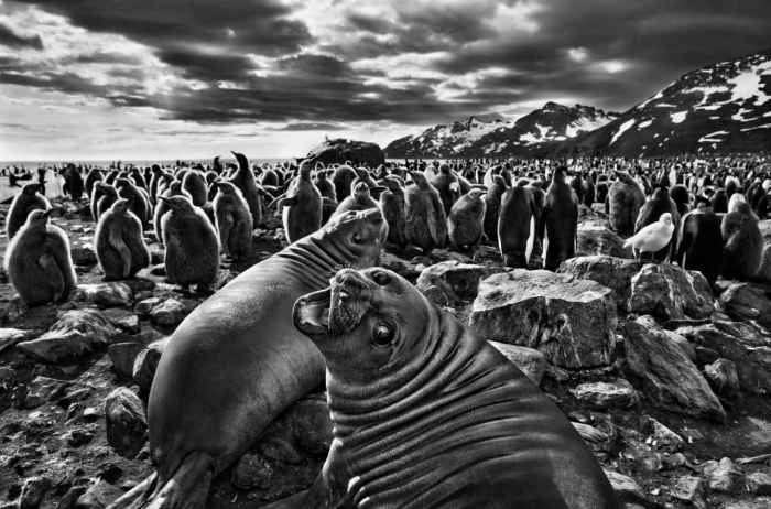 Sebastiao Salgado, photo 12