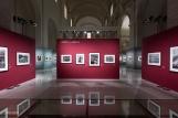 Mostra Genesi di Sebastião Salgado, a Forlì, foto 9