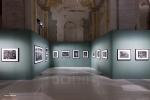 Mostra Genesi di Sebastião Salgado, a Forlì, foto 16