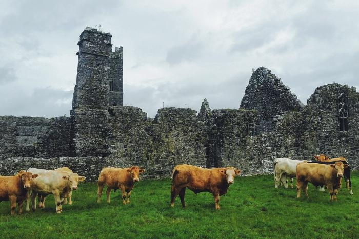 Diario di Viaggio in Irlanda - Giorno 7