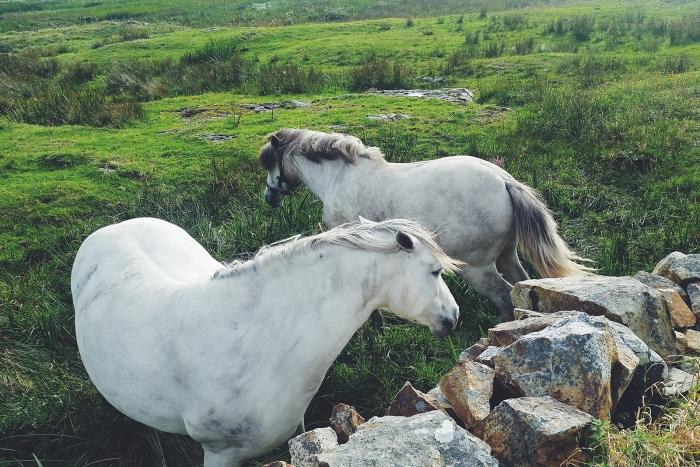 Diario di Viaggio in Irlanda - Giorno 9